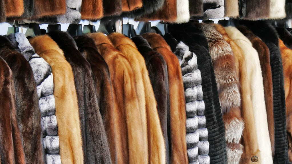 Why Everyone Needs a Mink Coat