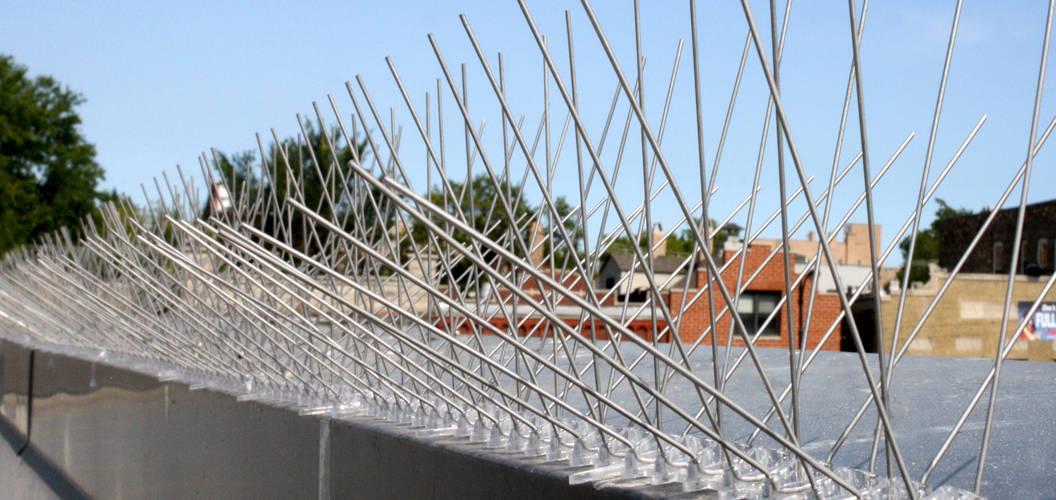 Benefits of Hiring Pest Bird Management Services in Albuquerque