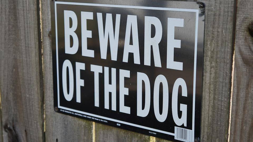 When to be Concerned About a Dog Bite