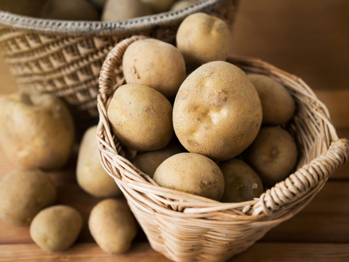 Growing potatoes indoors – An Overview