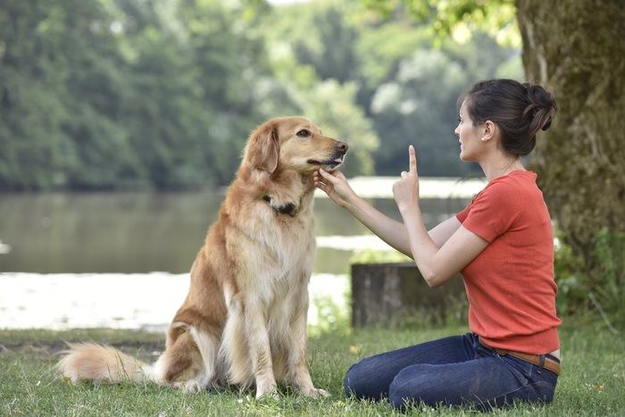 Having Trouble Training Your Dog