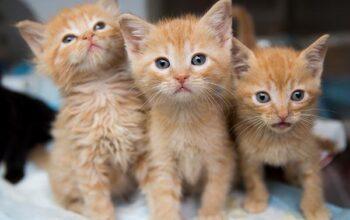 Kittens For Sale